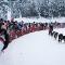 Этап кубка мира по гонкам на собачьих упряжках «По земле Сампо»