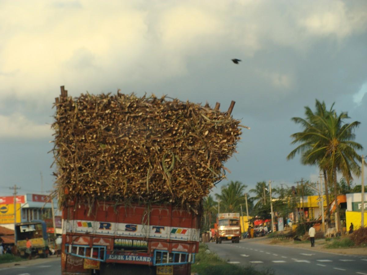 Индия. Фото автора