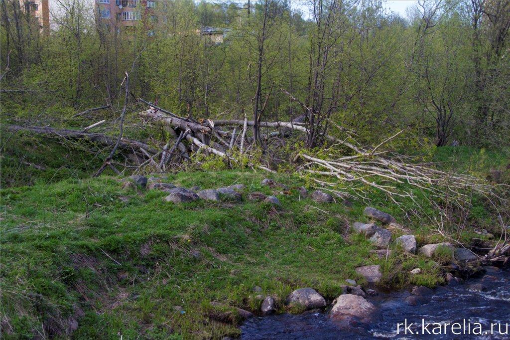 Берег реки Лососинки у моста на Комсомольском проспекте