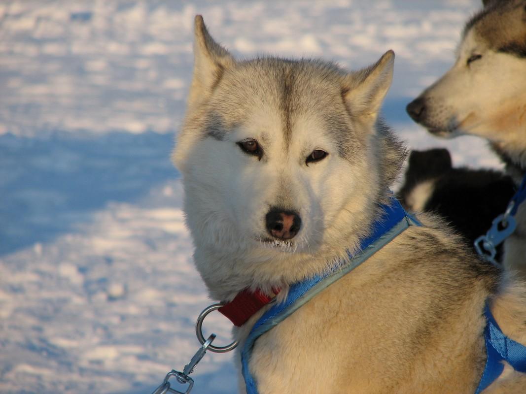 Карельская экспедиция на Северном полюсе