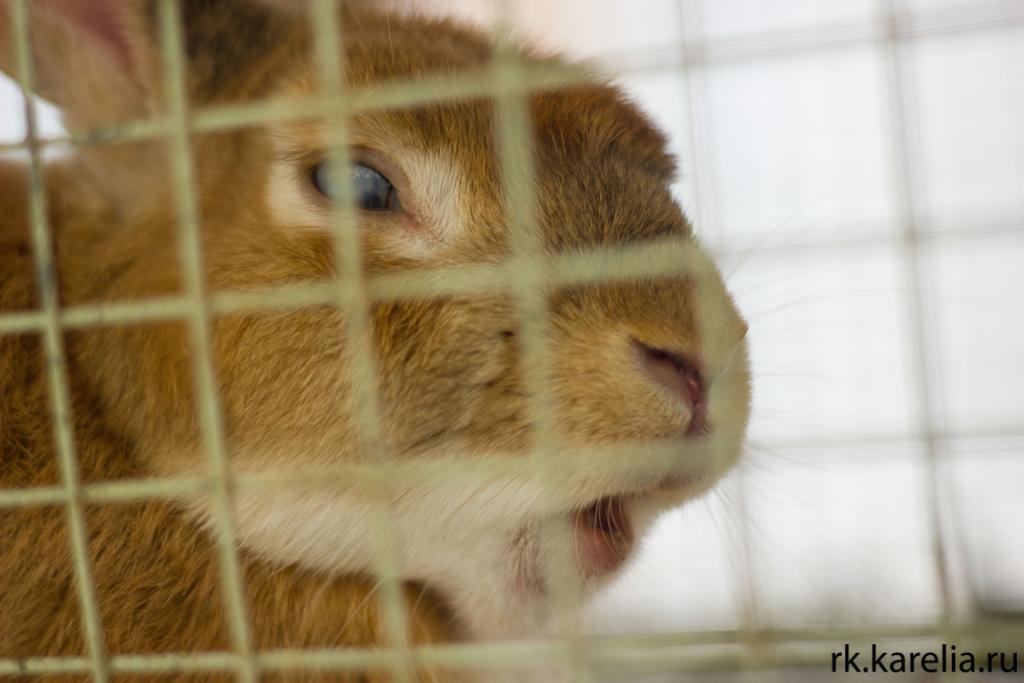 Животные Петрозаводска