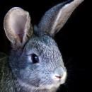 Кролики против безработицы