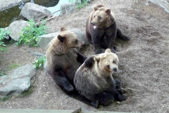 Медвежья беседа.
