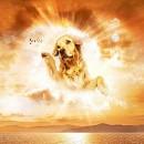 Рай собачий