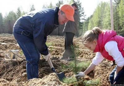 Карелия присоединилась к Всероссийскому дню посадки леса