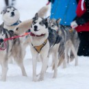 Экспедиция студентов ПетрГУ на собачьих упряжках преодолела треть своего маршрута по Карелии
