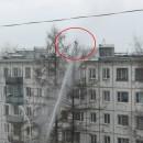 Кот забрался на верхушку дерева в Петрозаводске. Фото: http://ptoday.ru/