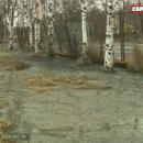 Разлив канализации в Петрозаводске. Фото: Сергей Беляев