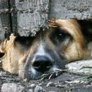 Фото: http://www.teleport2001.ru